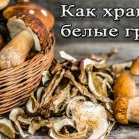 Сроки и способы хранения белых грибов
