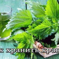 Заготовка, сушка и хранение крапивы