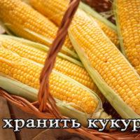 Условия и срок хранения кукурузы в домашних условиях
