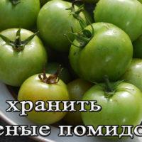 Хранение зеленых помидор на зиму