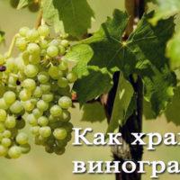 Хранение винограда на зиму