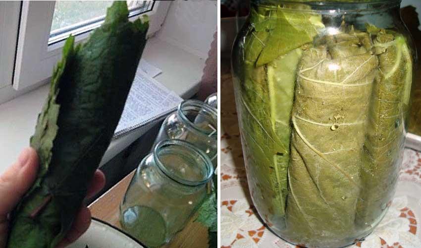 Хранение виноградных листье