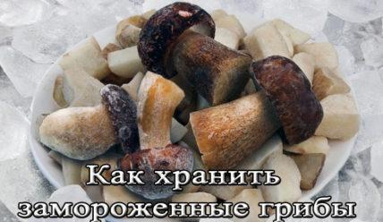 Срок и условиях хранения замороженных грибов