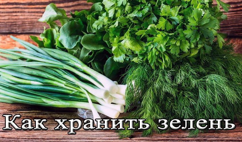 Как правильно хранить свежую зелень в холодильнике? Как и сколько хранить зеленый лук, петрушку, свежую мяту, шпинат, базилик, укроп в холодильнике?