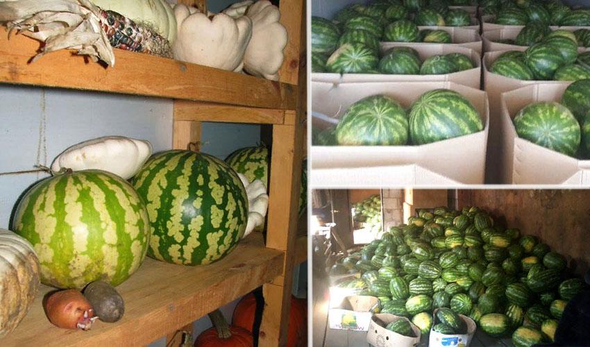 Сколько можно и как правильно хранить арбуз (в холодильнике, дома)