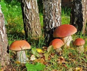 Опрос: Какие грибы можно взять из лесу домой, а какие нет