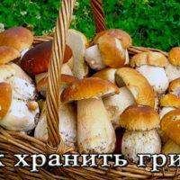 Срок и условия хранения грибов в домашних условиях