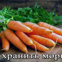 Срок и условия хранения моркови на зиму