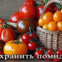 Хранение помидоров в квартире (в холодильнике, морозилке, на зиму)
