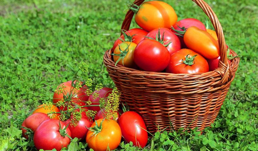 помидоры в корзинке
