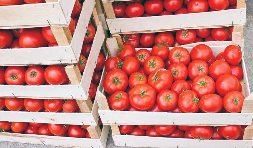 помидоры в ящиках
