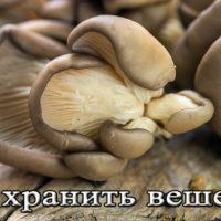 Срок хранения грибов вешанок в холодильнике, морозилке, на зиму