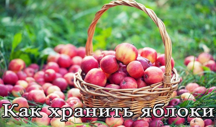 При какой температуре хранить яблоки в погребе