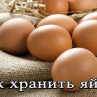 Срок и условия хранения куриных сырых и вареных яиц