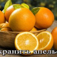 Срок и условия хранения апельсинов в домашних условиях