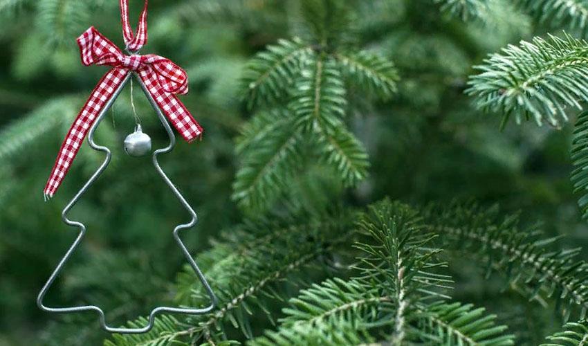 хранение живой елки