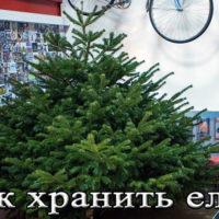 Хранение новогодней елки месяц, чтобы не осыпалась (в воде, песке)