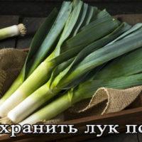 Как хранить лук порей на зиму после уборки (в подвале, холодильнике, морозилке)