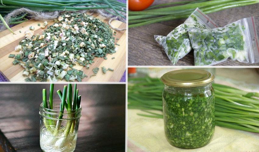 способы хранения зеленого лука