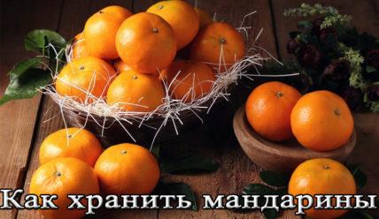 Температура и условия хранение мандарин дома