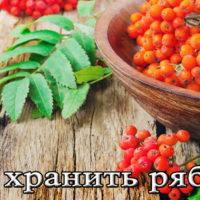Хранение черноплодной и красной рябины в домашних условиях