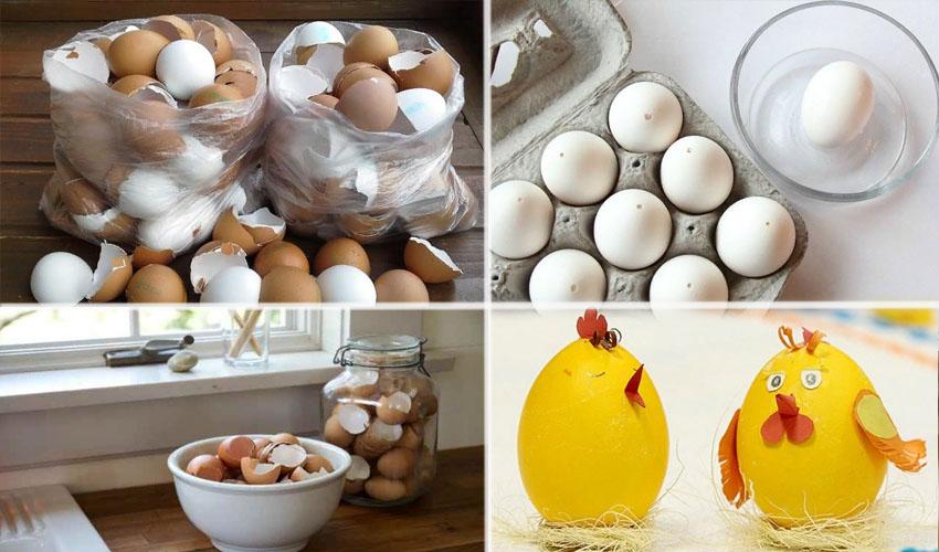 хранить скорлупу яиц