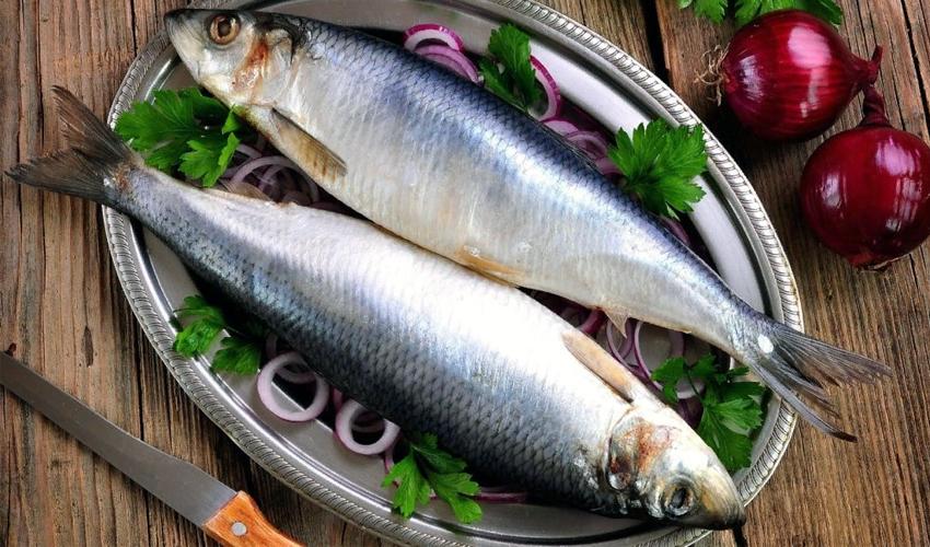 хранение рыбы