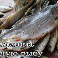 Хранение вяленой рыбы в домашних условиях (холодильнике, подвале, морозилке)