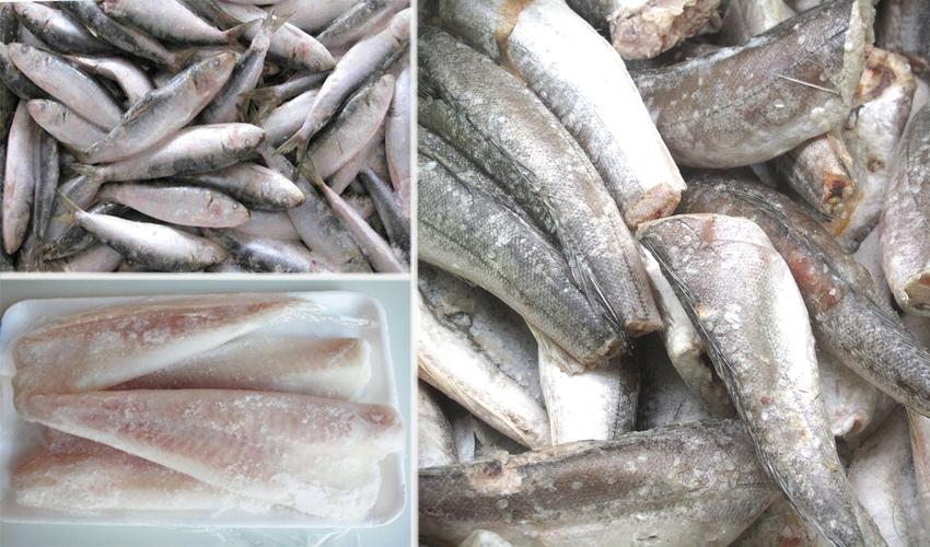 хранение замороженной рыбы