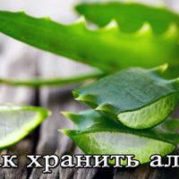 Хранение сока и листье алоэ в домашних условиях