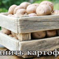 Температура и условия хранение картофеля на балконе, в погребе, подвале