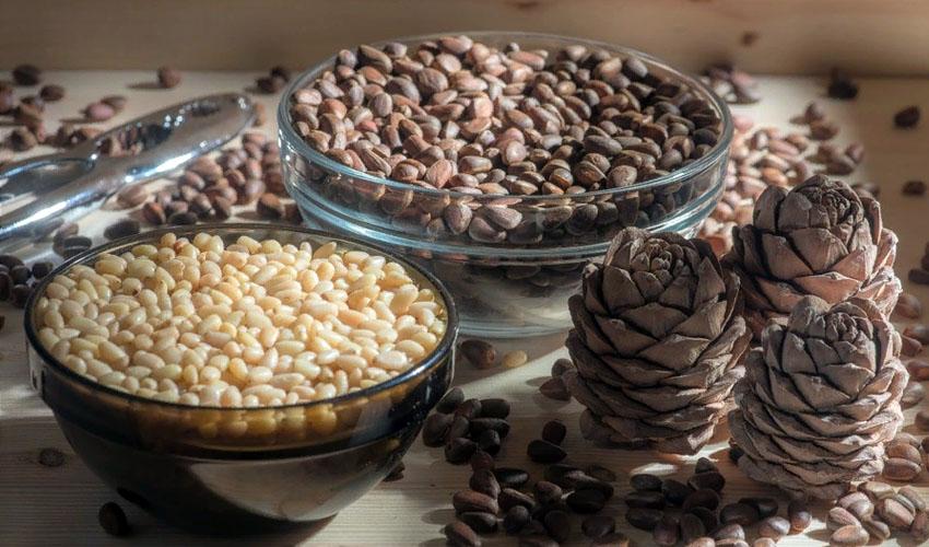 как выбрать кедровые орехи