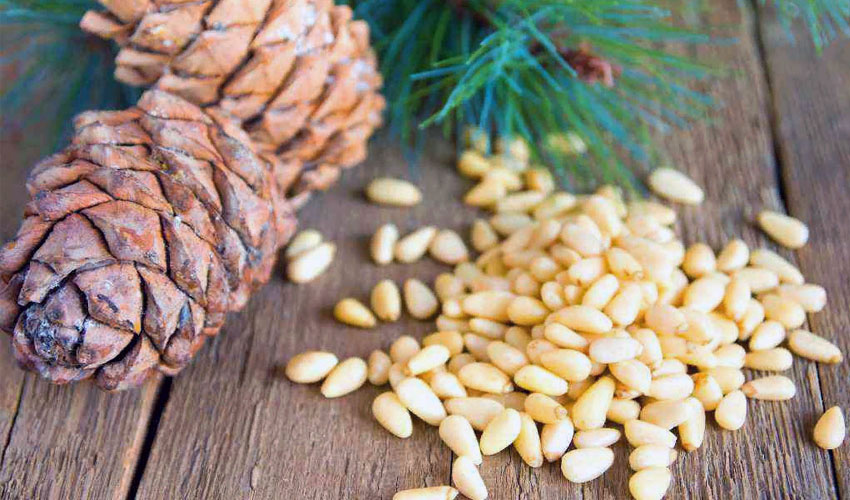 срок хранения кедровых орехов