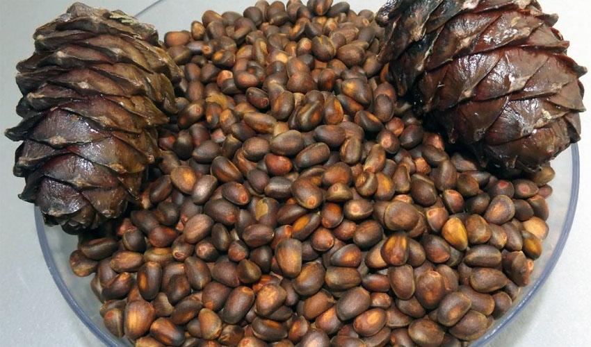 неочищенные кедроые орехи