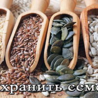 Хранение тыквенных семечек и семян подсолнуха