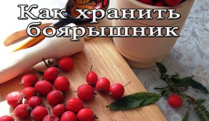 Срок и условия хранения боярышника, и спиртовой настойки из него