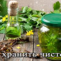 Срок хранения травы чистотела (сухого, медицинского, в ампулах)