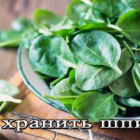 Срок и условия хранения шпината (в холодильнике, на зиму)