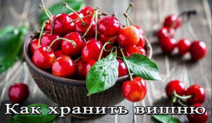 Условия и срок хранения вишни (с косточкой и без)