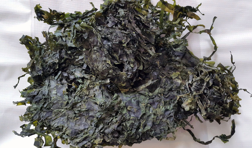 сушеная морская капуста