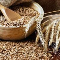 Срок и условия хранения семян пшеницы
