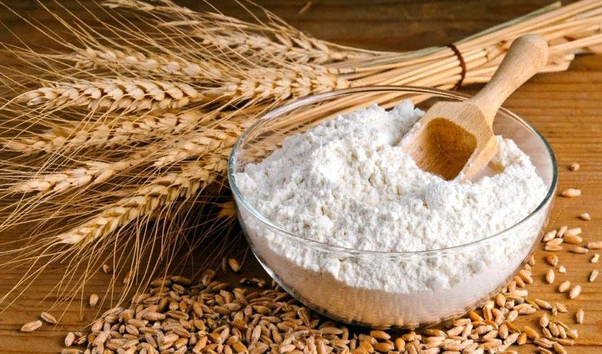 пшеница в колосьях