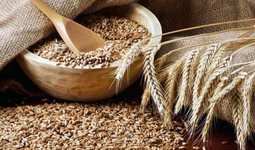 В чем хранить зерно для кур