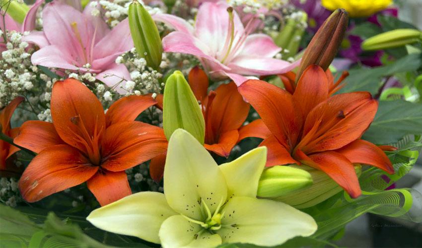как сохранить букет лилий