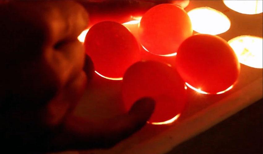 яйца под овоскопом