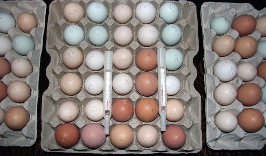 хранение инкубационных яиц