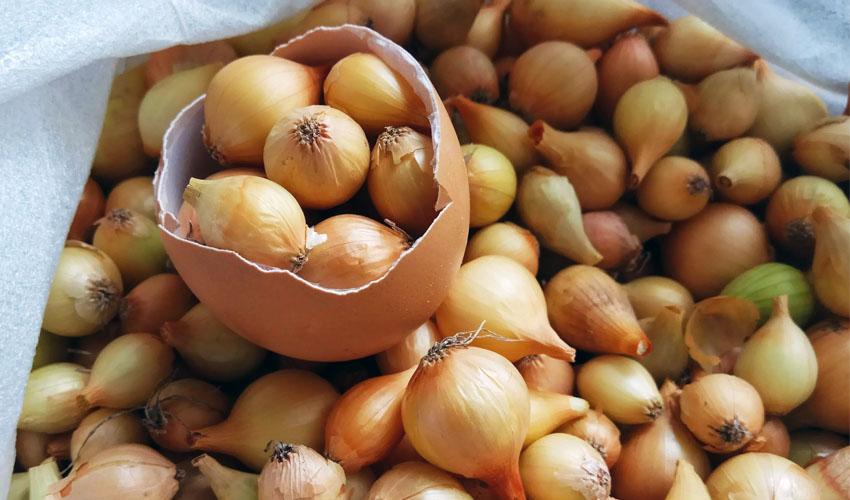 как сохранить лук севок