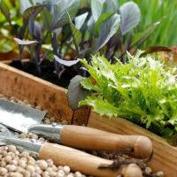 Выбор и хранение рассады перед высадкой в грунт