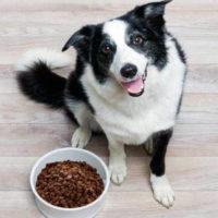 Хранение сухого корма для собак и кошек