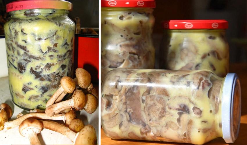 как хранить грибы в банках